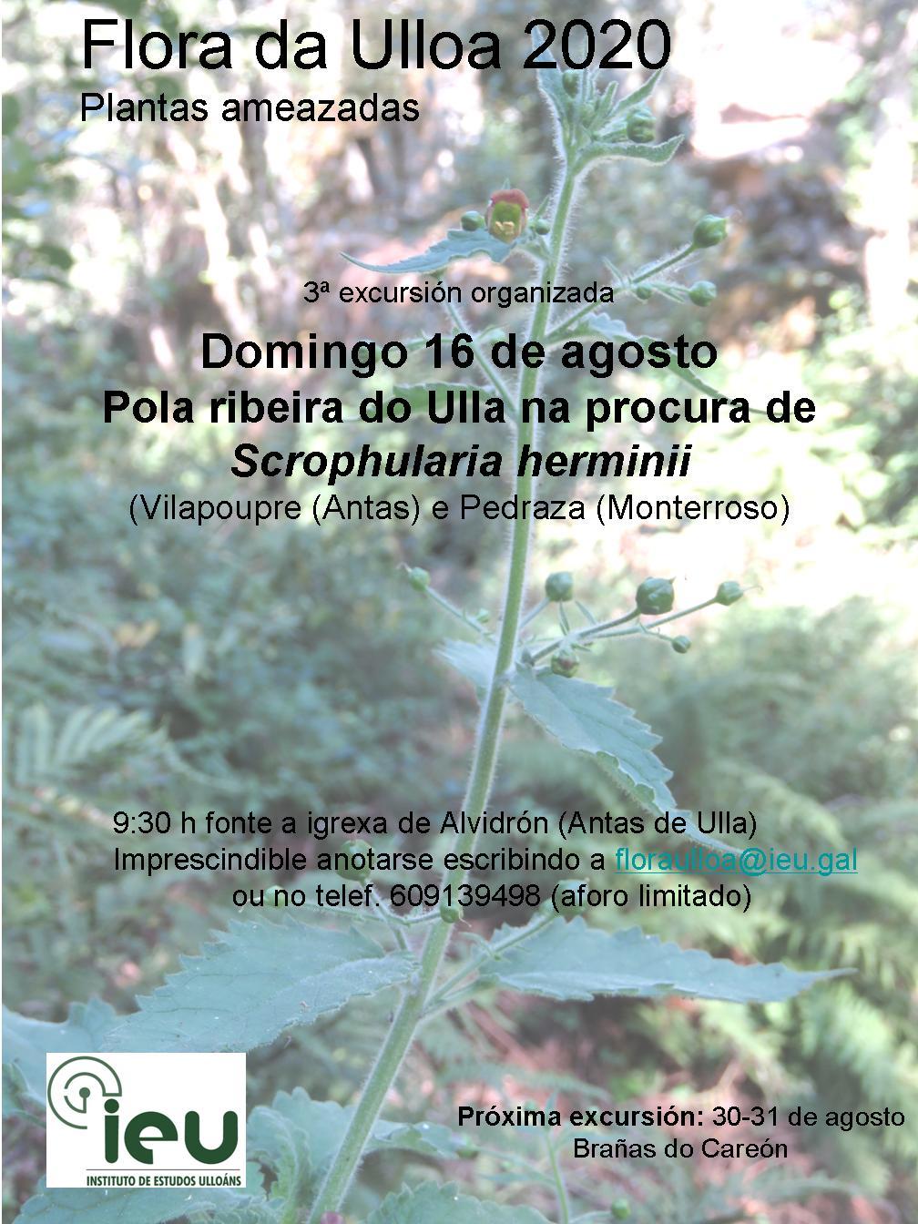Excursión Flora da Ulloa 3-2020, Ribeira do Ulla na procura de Scrophularia herminii, Instituto de Estudos Ulloáns